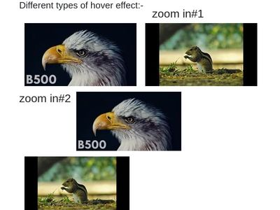 Different types of hover and transition effect